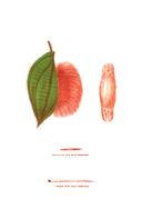 Page civ